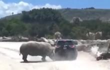 En video | Rinoceronte ataca a camioneta en zoológico de Puebla, México
