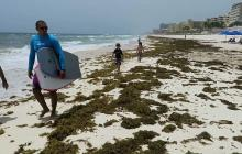 Macroalgas inundan playas de Caribe mexicano