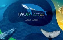 Visiones opuestas de caza de ballenas buscan aliados en Brasil