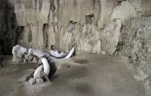 En video   Hallan restos de 14 mamuts en el centro de México