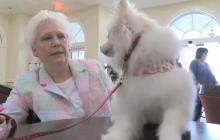 Desfile de perros alienta a residentes de geriátrico en Miami