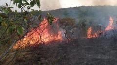 Mindefensa afirmó que el Gobierno está comprometido en recuperar los daños causados por la deforestación.