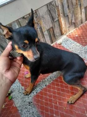 Mascotas Wasapea | Buscan a Pelusa en Baranoa