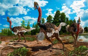 En imágenes | Así era el 'Corythoraptor jacobsi', una nueva especie de dinosaurio descubierto en China