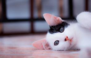 #MascotasWasapea en el Día Internacional del Gato