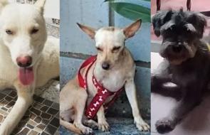 Mascotas Wasapea | Ayuda a estos perritos a volver a casa con sus dueños