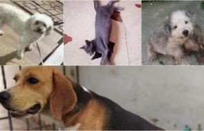 Mascotas Wasapea | Ayúdanos a que Dobby, Luna, Iris y otra perrita vuelvan a su hogar