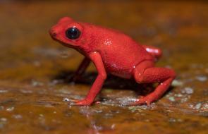 Imagénes de especies avistadas en Cerro Murrucucú