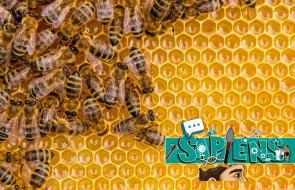 Sapiens   Las abejas son fundamentales en el medio ambiente
