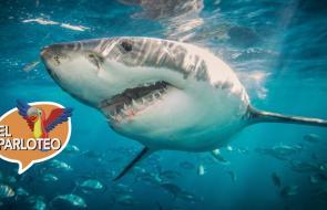 El Parloteo | Esta es la polémica por la caza de tiburones en Colombia