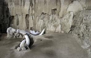 En video | Hallan restos de 14 mamuts en el centro de México