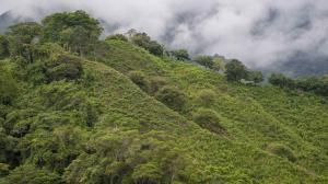 Imagen aérea de la Sierra Nevada de Santa Marta, un territorio rico en fauna y flora.