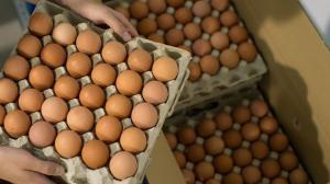 Polémica: ministro Carrasquilla dice que docena de huevos cuesta $1.800