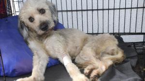 'Negrita', perra del cantante Rebel, está en estado crítico