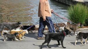 Recomendaciones que debe seguir para elegir un buen paseador de perros