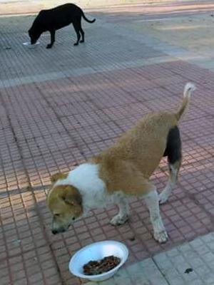 Mascota desaparecida en el barrio Bellavista de Barranquilla