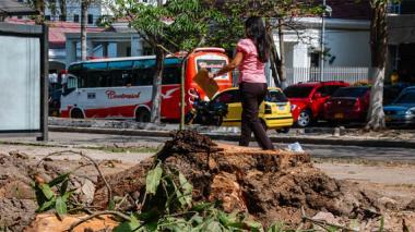 El árbol fue talado en horas de la mañana ayer, pese a las prohibiciones emitidas por el Damab a residentes de la vivienda.