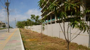 Árboles de mango sembrados a un lado de la carrera 51B con calle 90.