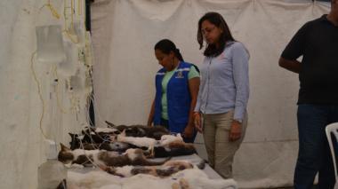 En brigada de salud distrital esterilizan a más de 400 animales