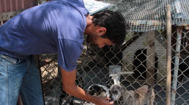 Polémica por refugio de animales en Campo Alegre