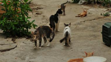 Los felinos, minutos antes de ser rescatados de la casa donde estaban abandonados.