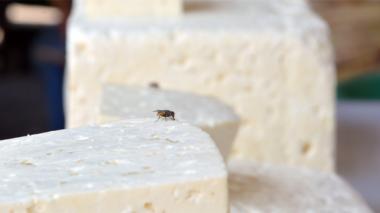 Controles en Malambo por consumo de queso en mal estado