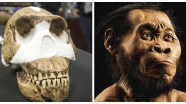 Cráneo de la nueva especie de homínido descubierta y animación del Homo naledi.