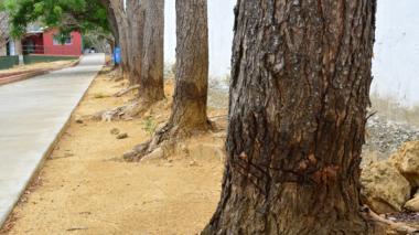 ¿Por qué atacaron las raíces de 49 árboles?
