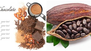 La coca le dio paso al mejor cacao del país