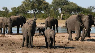 Ocho detenidos en Zimbabue por envenenar a elefantes con cianuro