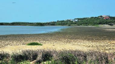 Empiezan a llegar aves al lago de  El Cisne