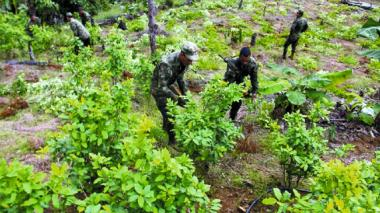 Gobierno apoya seis nuevos programas de sustitución de cultivos ilícitos