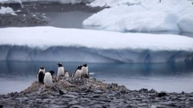 Iceberg causa muerte de 150.000 pingüinos en la Antártida