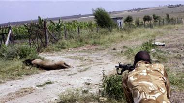 Escapan dos leones de parques en Kenia y Sudáfrica