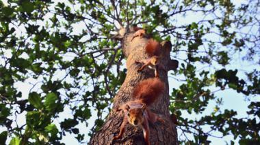 De la lluvia de oro al caucho: árboles que echan raíces en Barranquilla
