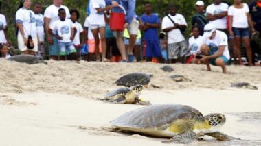 Liberadas 33 tortugas en Isla del Rosario