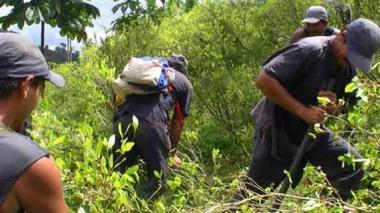 Gobierno y Farc logran acuerdo para la sustitución de cultivos ilícitos