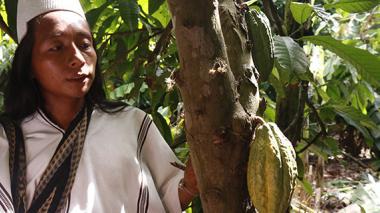 Hernan Villafaña, arhuaco, junto a una planta de cacao en la vereda Don Diego.