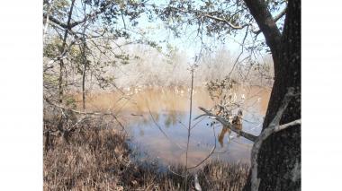 En un sector cercano al caño Aguas Sucias se aprecian manglares muertos.