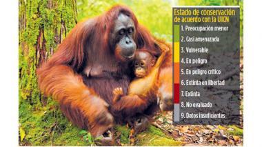 Gorilas y cebras entran a lista de animales en peligro de extinción