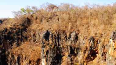 Elaboran base de datos del bosque seco en Latinoamérica