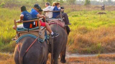 Sitio de viajes Tripadvisor no venderá más entradas para lugares que atenten contra animales silvestres