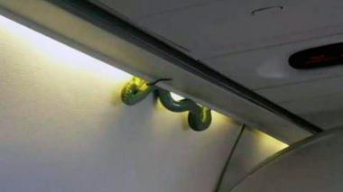 En video: Serpiente aterroriza pasajeros en vuelo de México