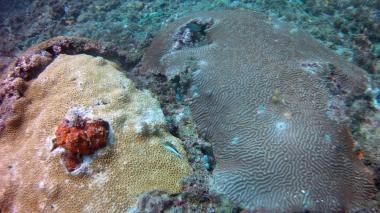 Corales, mangle rojo y 50 especies de peces, el tesoro del Departamento