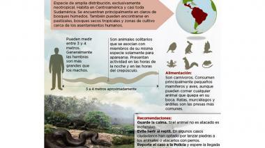 Seis boas constrictor han sido capturadas en Barranquilla en los últimos once días: Policía