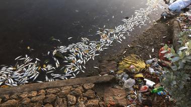 Reportan mortandad de peces en la bahía de Cartagena