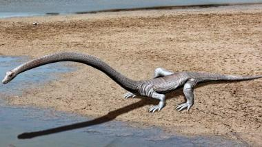 Animal conocido como dinocephalosaurus.