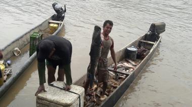 Mortandad de peces en el río Magdalena tras avalancha
