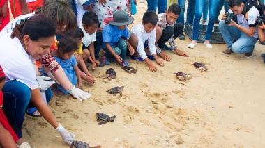 Con liberación de caimanes aguja y tortugas se celebró en La Guajira el Día Mundial de la Vida Silvestre