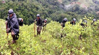 EEUU reporta 188.000 hectáreas de coca en Colombia, cifra récord